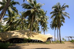 coconut-garden-8
