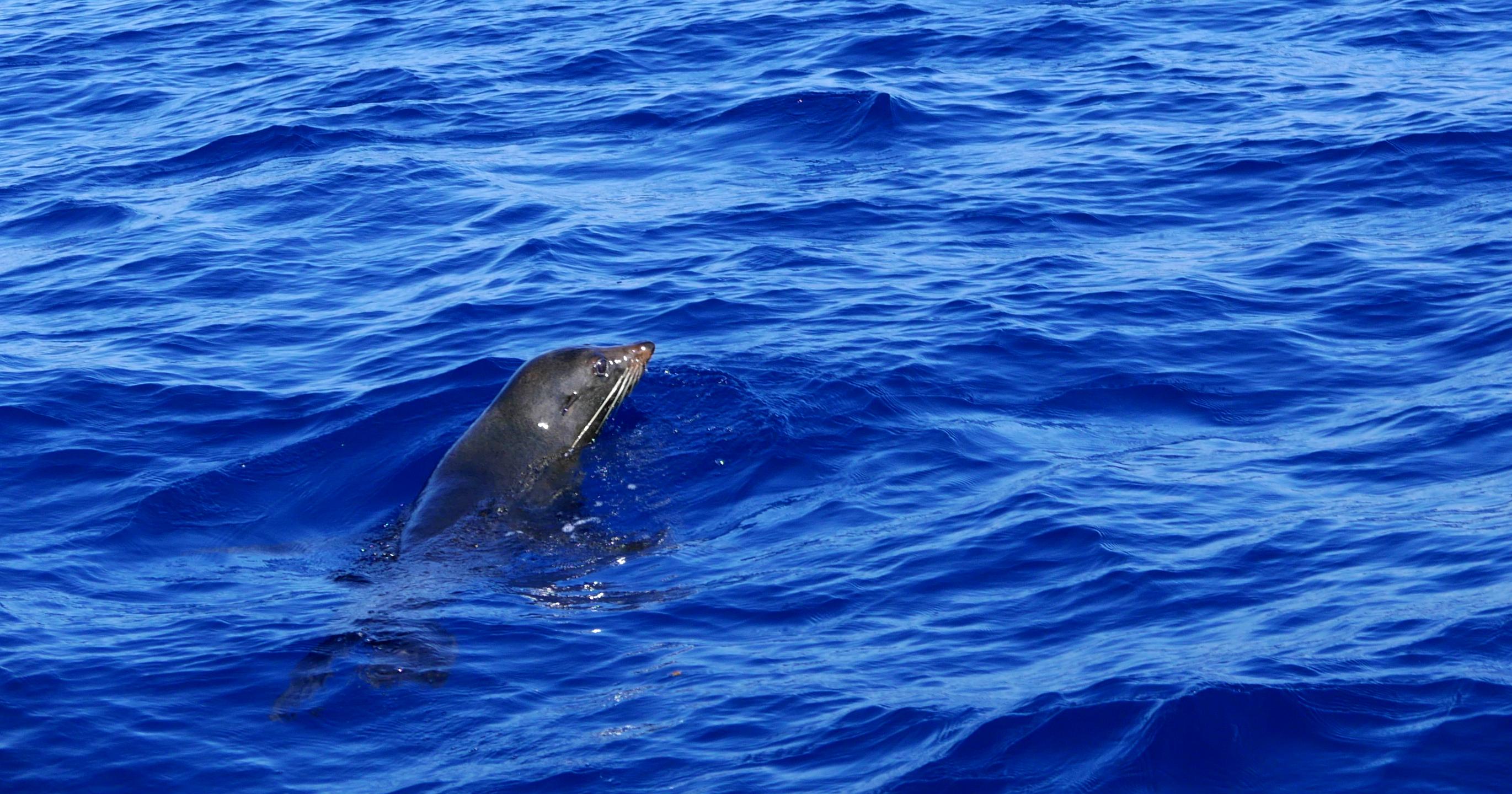 Dolphin Seafaris seal