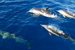 Dolphin Seafaris 4