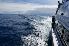 Dolphin Seafaris 5