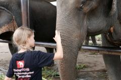 elephantstay 1