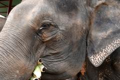elephantstay 2