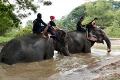 elephantstay 4