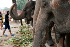 elephantstay 7
