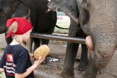 elephantstay 8