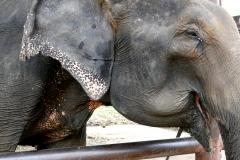 elephantstay 9