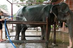 elephantstay 13
