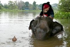 elephantstay 3