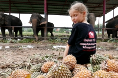 elephantstay 12