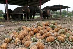 elephantstay 6