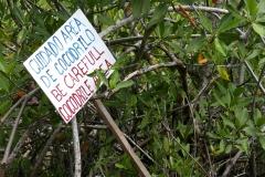 cenotes crocodile area