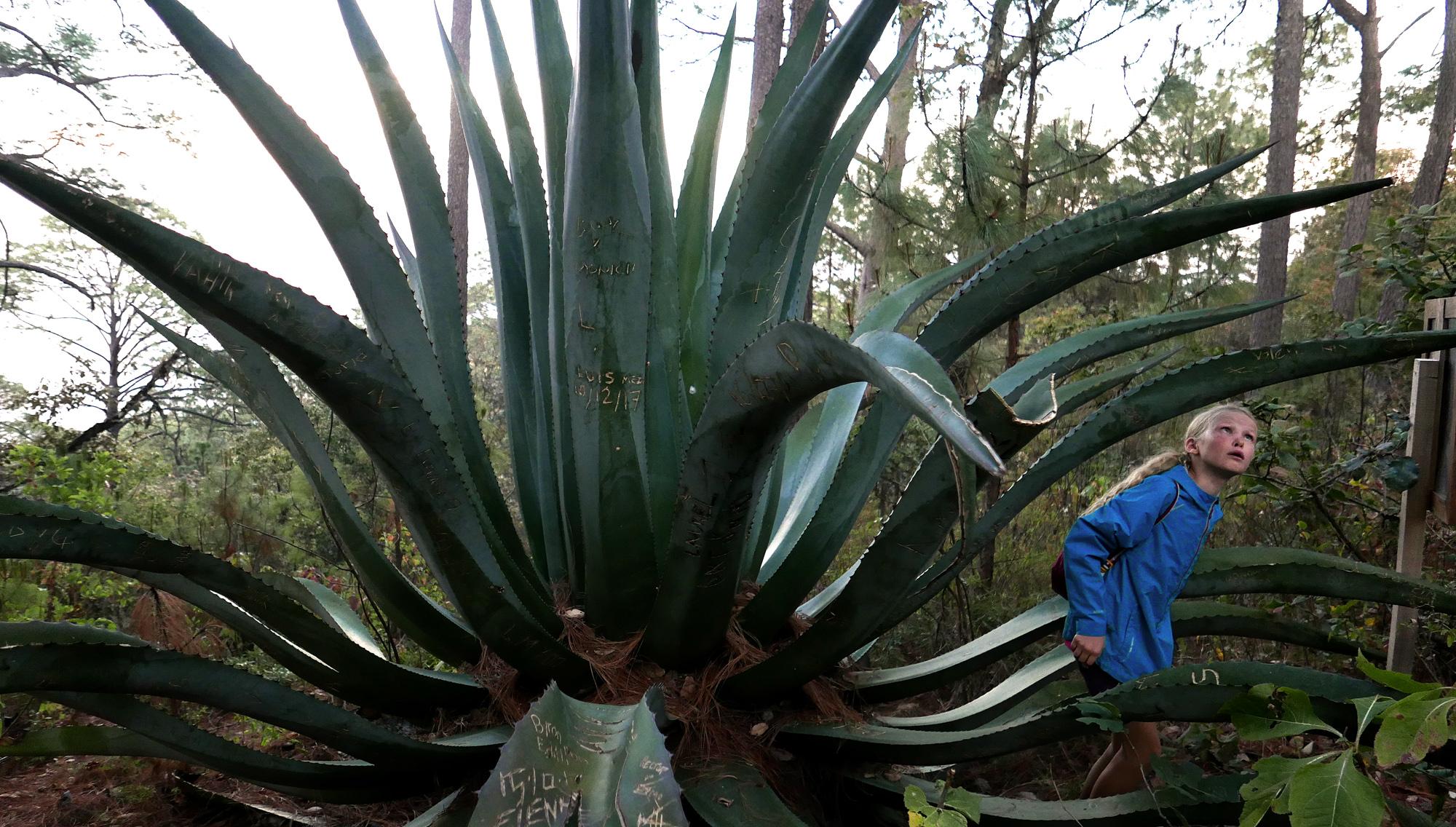 San Sebastian Mexico flora