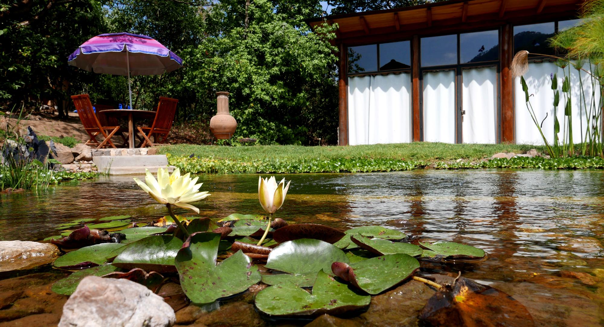 San Sebastian Mexico garden