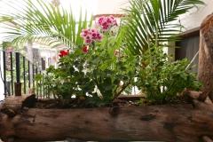 Las Mariposas Eco Hotel garden