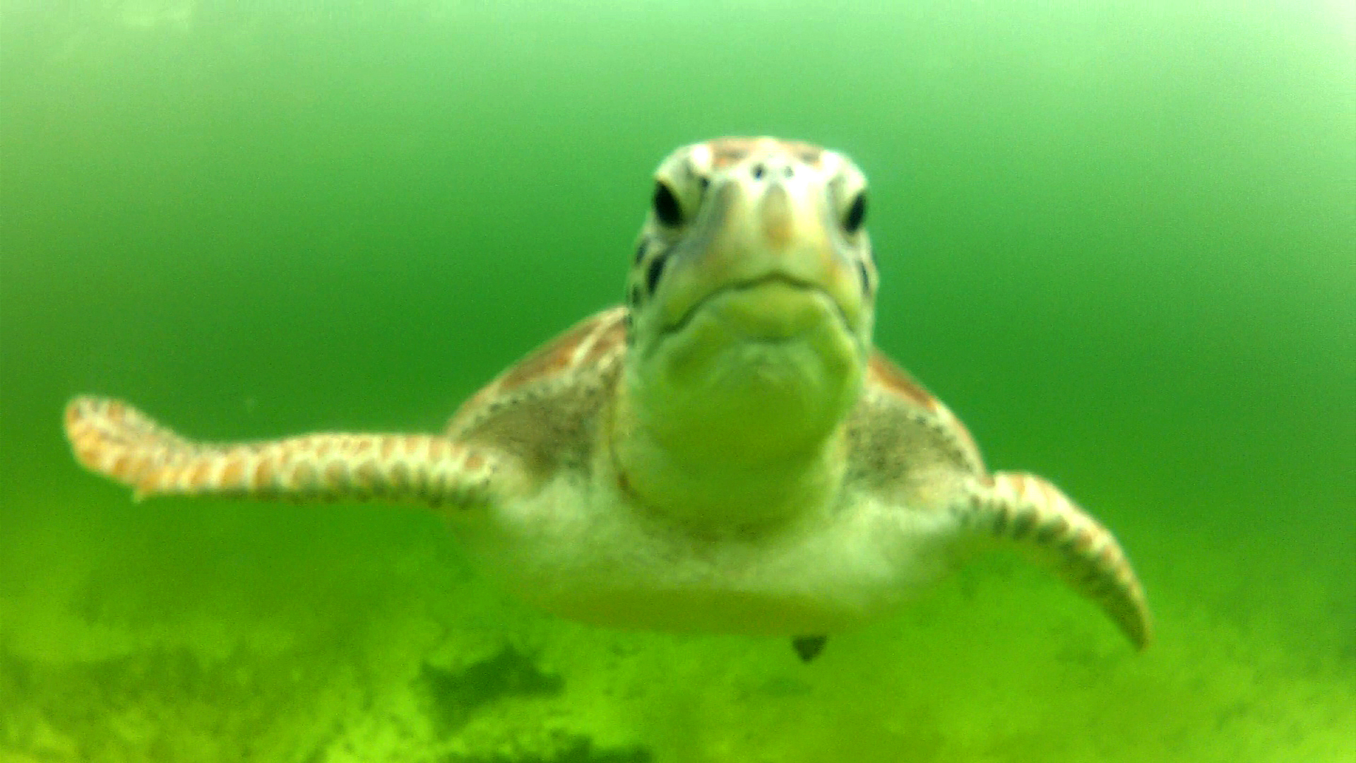 sea turtle with tulum diving and travel