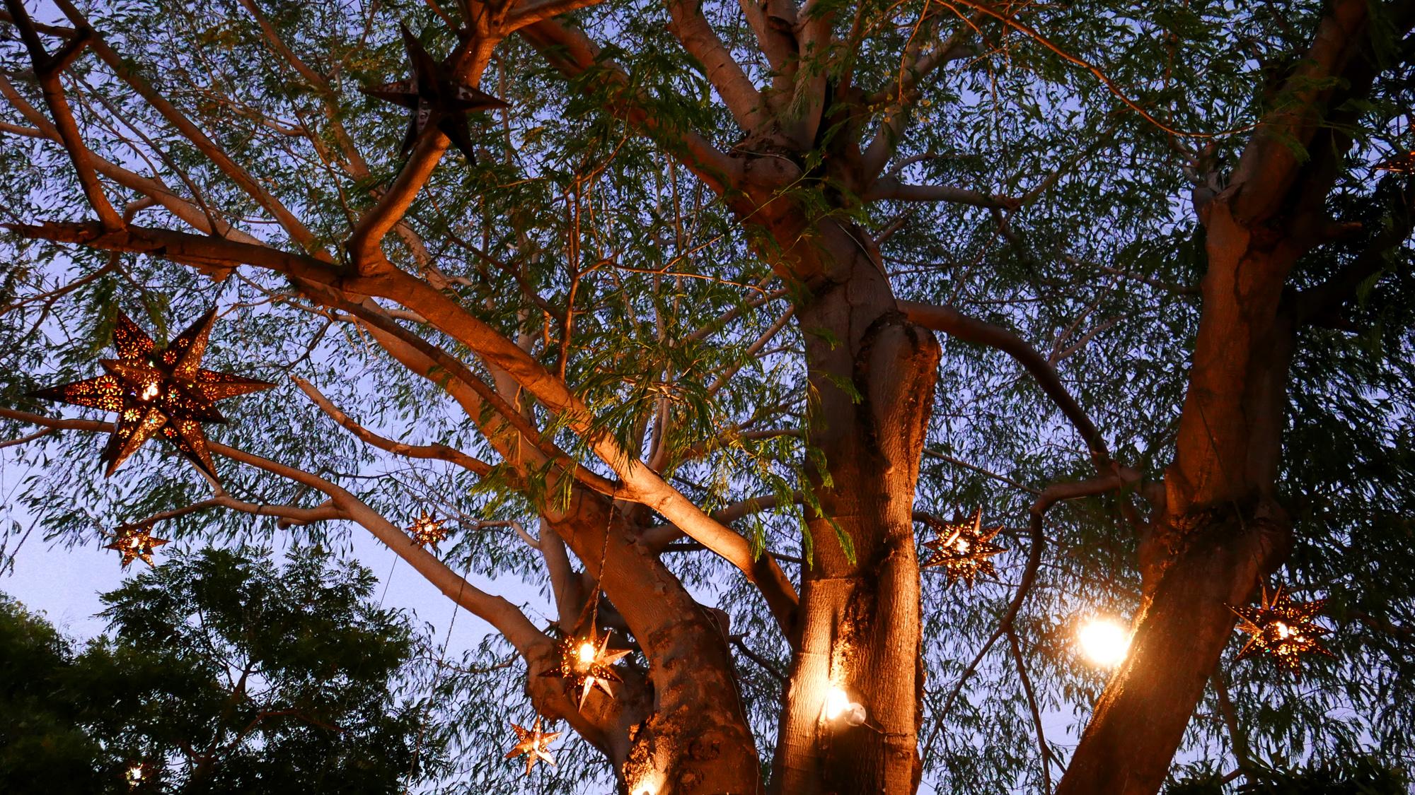 villas parota tree