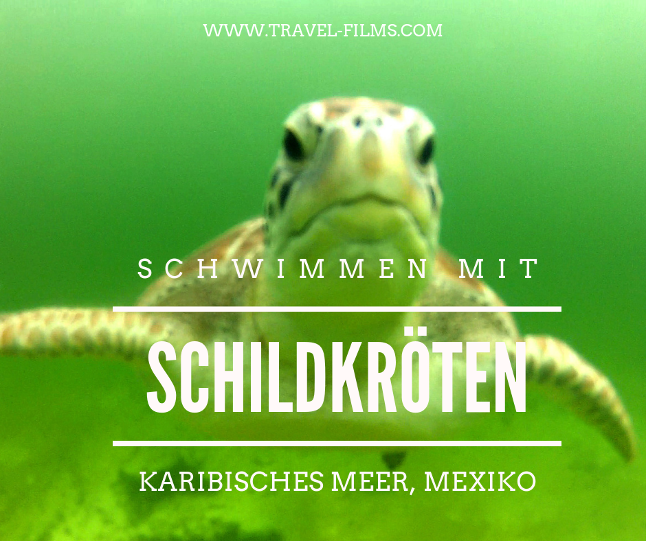 Schwimmen mit Schildkroeten Karibik