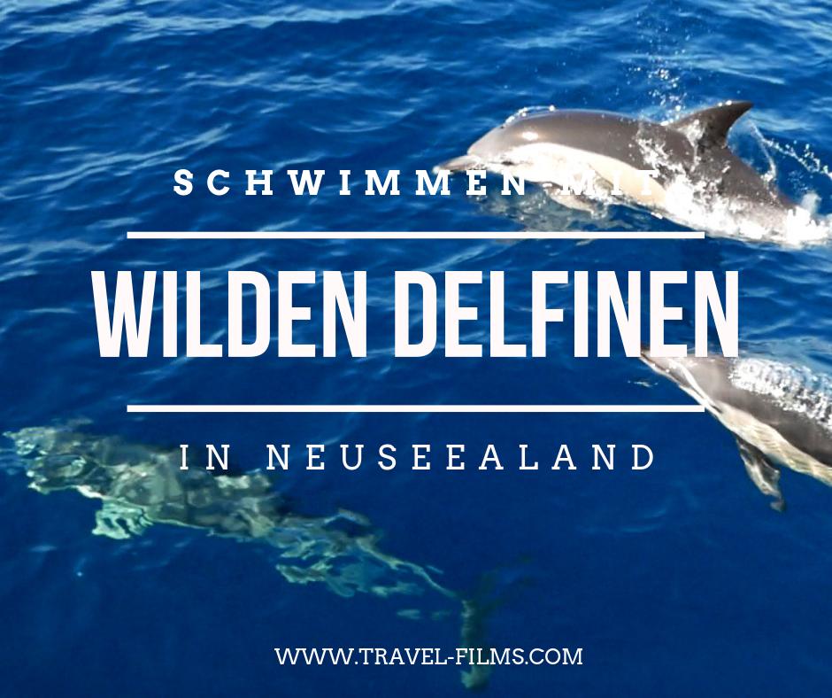 schwimmen mit wilden delfinen