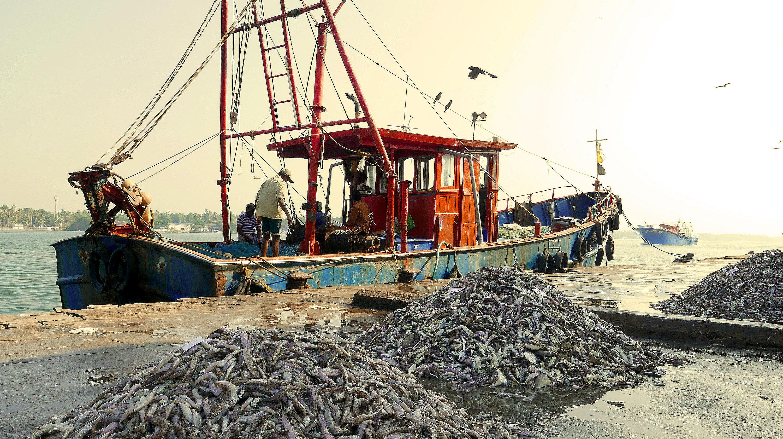 Kerala fishermans harbour India