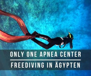 Freediving lernen rotes meer